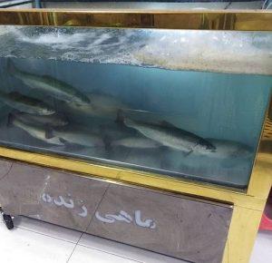 آکواریوم ماهی زنده ماهی فروشی